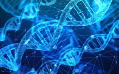 Proteine Aminoacidi e sport